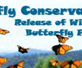 Release of Wings Butterfly Farms
